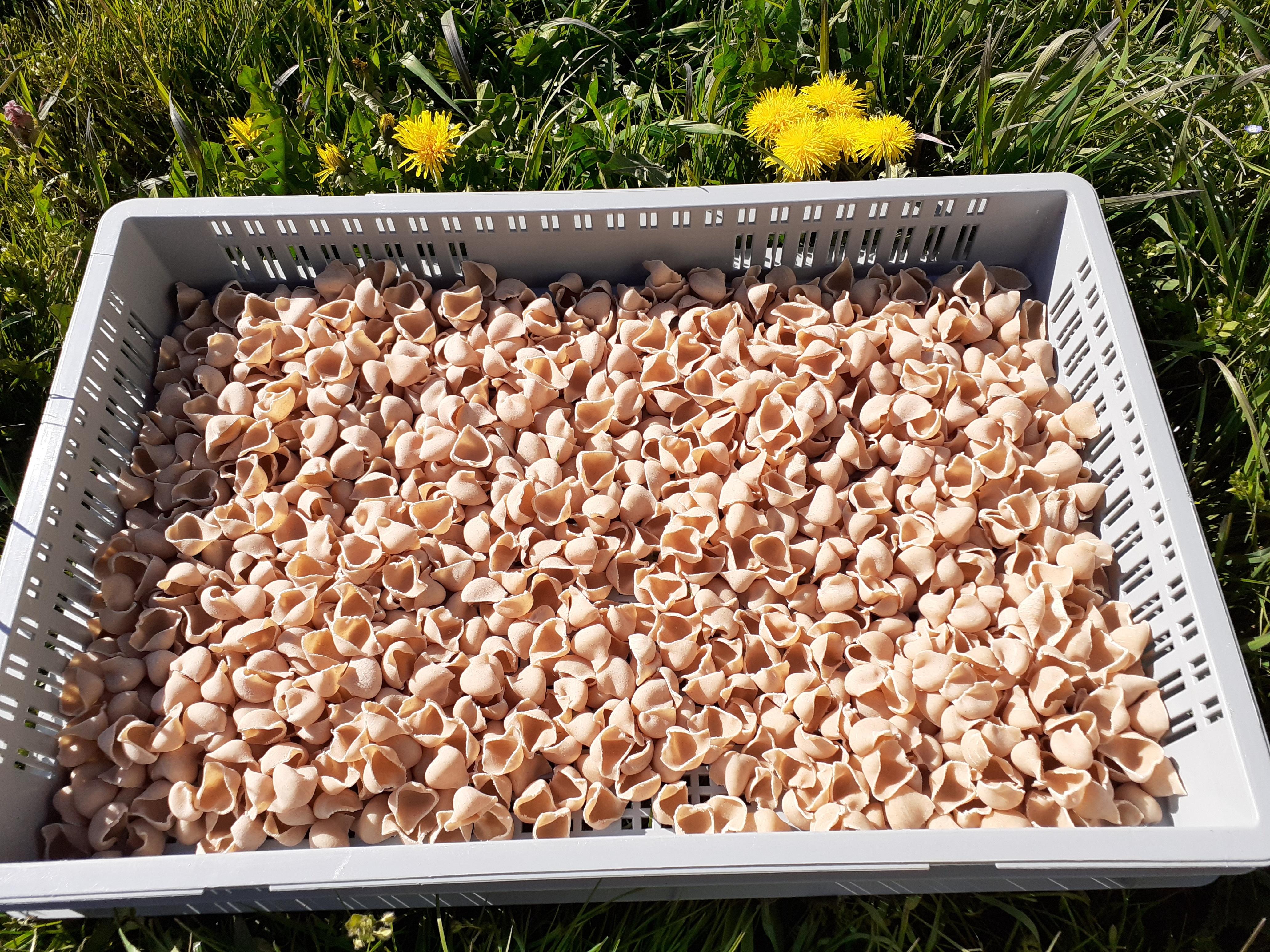Macaroni à l'épeautre (500g)